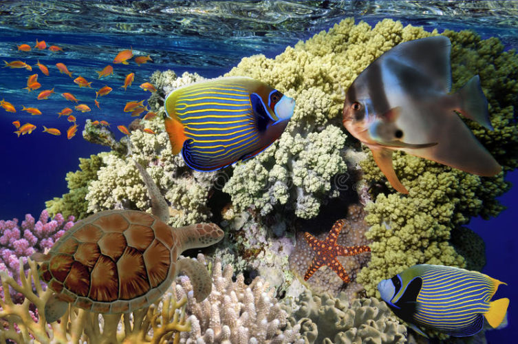 Египет кораловые рифы