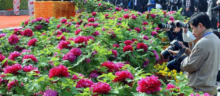 Лоян Национальный цветочный сад
