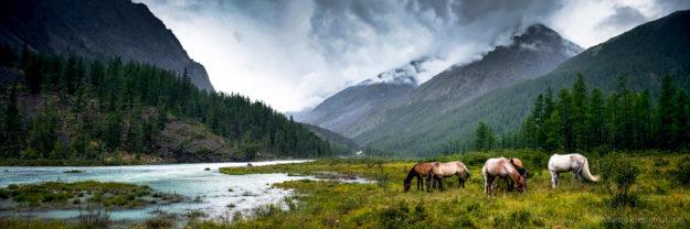 Алтай панорама