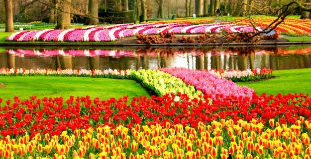 Амстердам Национальный парк Кекенхов