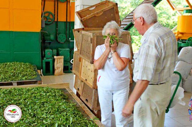 Экскурсия на чайную фабрику